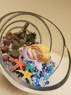 Succulent / Lithops and live dry starfish:- Terrarium