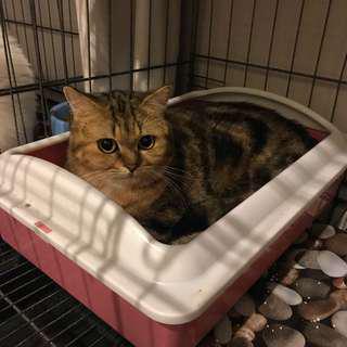 Cat boarding / Hotel Kucing