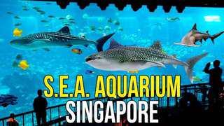 Sea Aquarium Singapore 🇸🇬