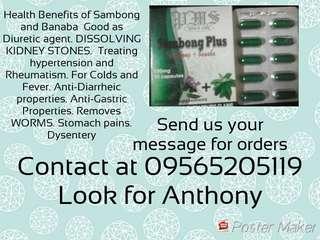 Herbal SAMBONG PLUS