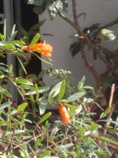 🚚 Plant