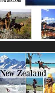 Apply new zeland working visa