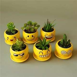 Cactus & Succulent Planter Pot Smile Face