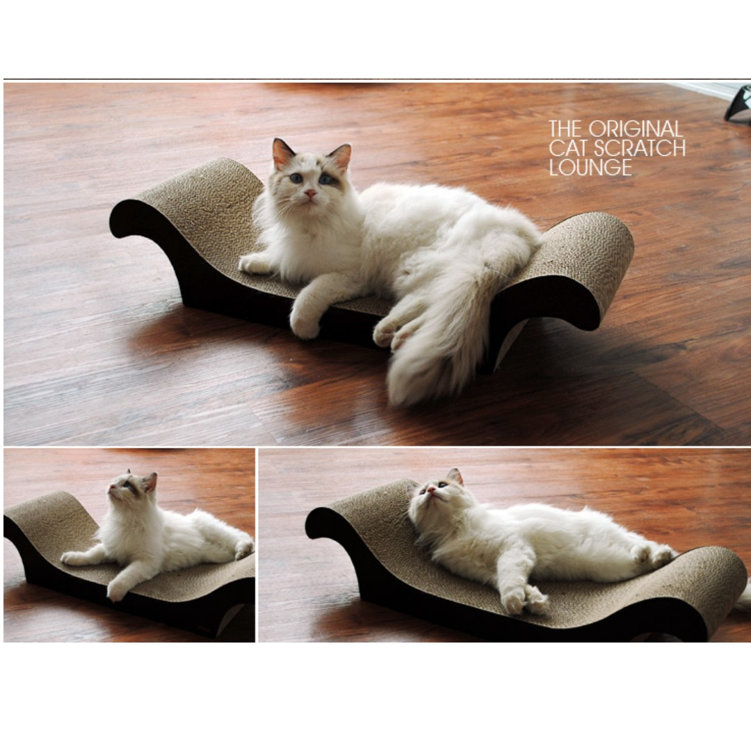 Strange Last Set Big Size Cat Scratching Sofa Board Throne Lounge Andrewgaddart Wooden Chair Designs For Living Room Andrewgaddartcom