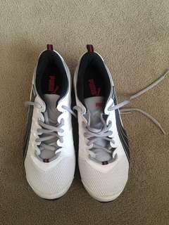 Brand new puma sneaker