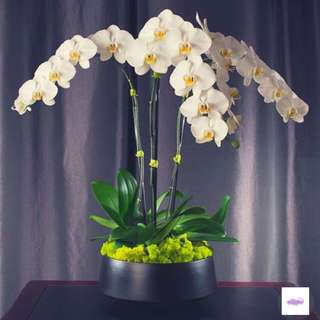 Orchids arrangement special gift