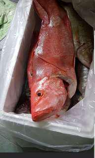 Fresh chemical free fish direct from the sea. Suitable for Hawkers and restaurants. $10/kg for whole box(25-29kgs).