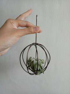 Airplant hanger (#1)
