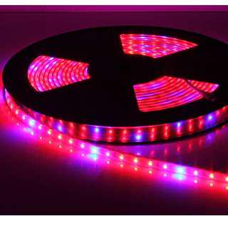 🚚 Water Proof Plant growth LED Strip (5 meters) For Sale