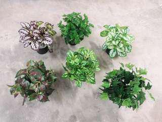 Assorted artificial plants