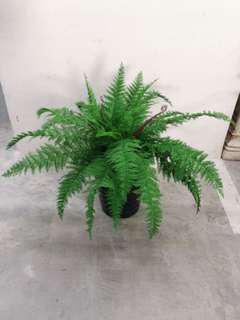 Artificial Plant- 70 cm