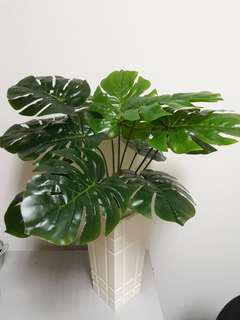 Artificial Money Plant with white wooden pot