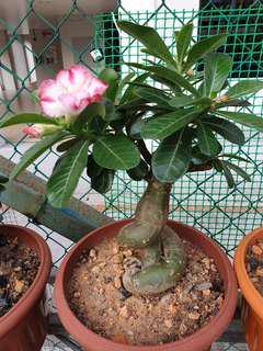 Flower Pot For Sale