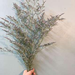 🚚 卡斯比亞 乾燥花