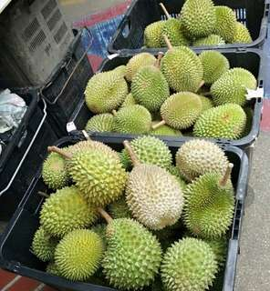 Delicious MSW durians available!