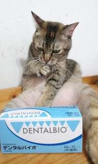 【口益適】Dentalpio 犬貓口腔健康咀嚼片100粒 實驗證明 容易入口 適合不擦牙的貓狗 防止口臭和牙齦炎 附送貓貓超開胃零食一包