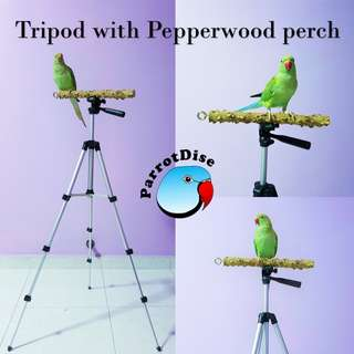 Parrot Tripod stand with Pepper wood perch