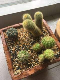 Cacti and succulents in pot