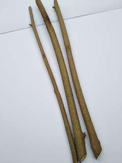 Lemuni Ungu/5 cuttings