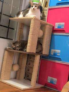 🚚 雙層貓跳台