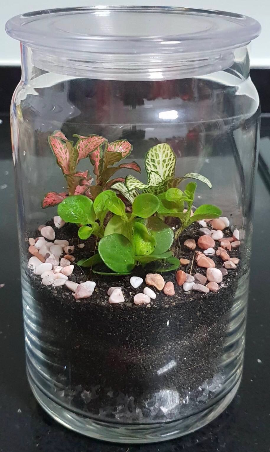 Tropical Glass Jar Terrarium Gardening Pots Planters On Carousell