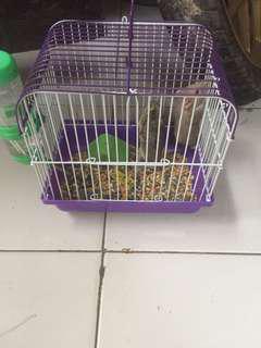 Hamster +kandang
