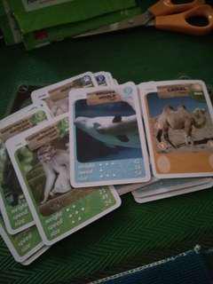 Amnimals collectibles card