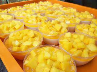 Fresh Mangoes Panna Cotta (10 container)