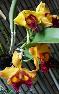 欣賞與分享  蘭花