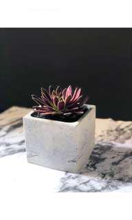 🚚 Square Concrete Pot
