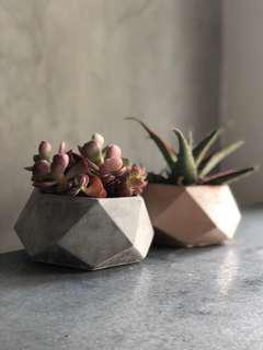 🚚 Sted Geometric Concrete Planter