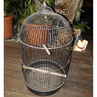 Steel Bird cage