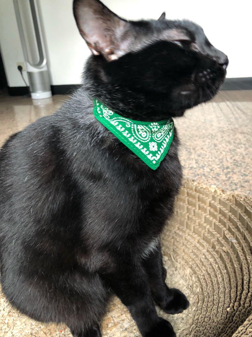 Pet Kerchief Collar