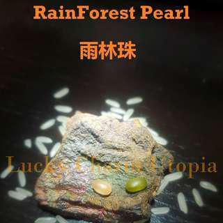 Rainforest Pearl Talisman ( 雨林珠 )