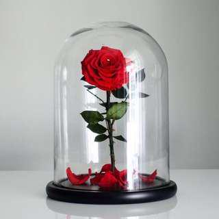 🚚 Luxurious Preserved Ecuadorian Roses in Giant Glass Dome