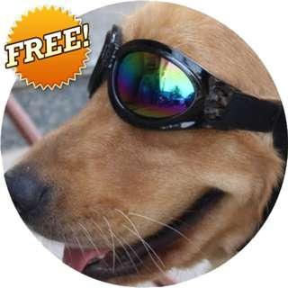 FREE Dog Sunglasses From USA
