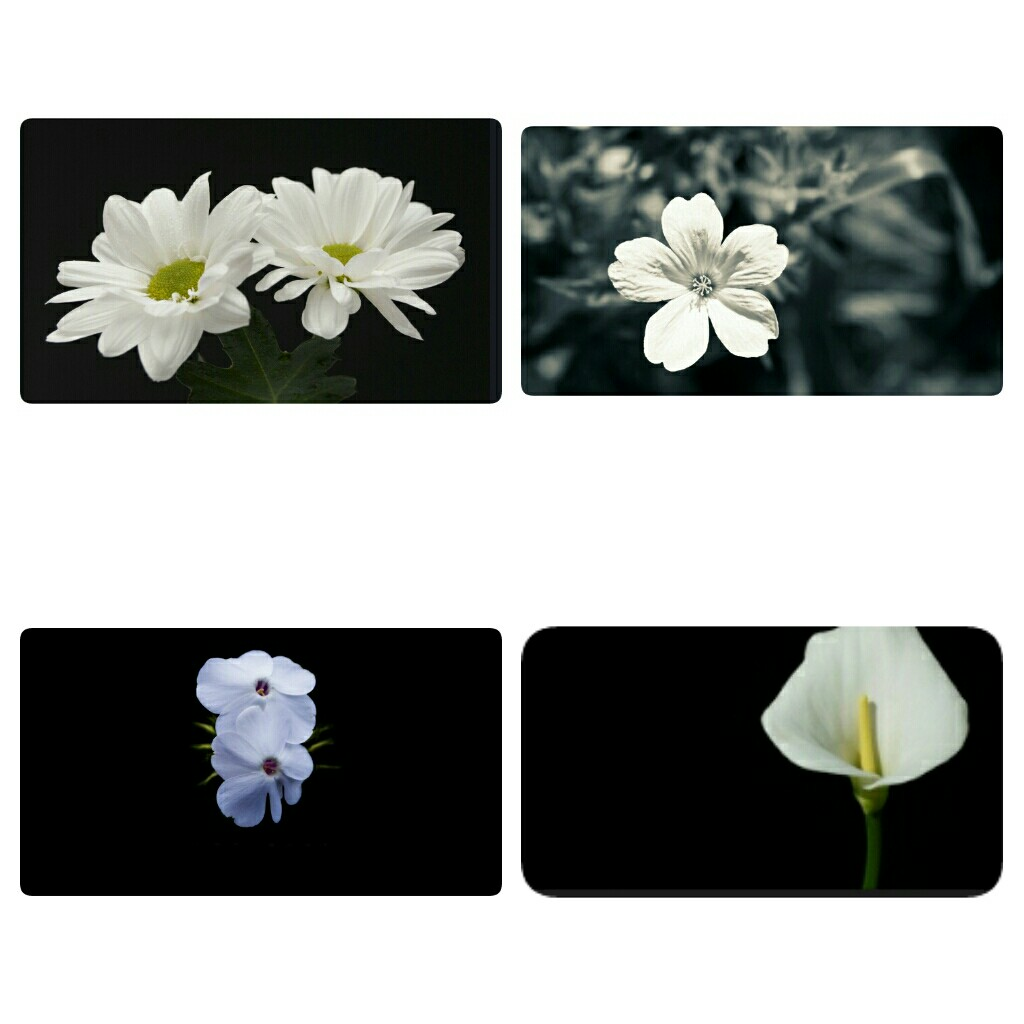 Black white flower frame rumah perabot home décor di carousell