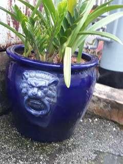 Purple lion head pot