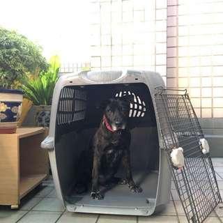 🐶 大型犬 運輸籠 《Hagen 加拿大品牌》 上飛機、船、汽車皆可固定、上蓋可拆當成睡床!需要2人搬運! 活動門兩邊皆可開啟或拆下~
