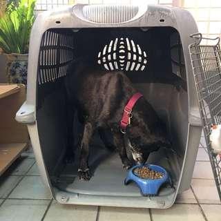 大型犬 運輸籠 《Hagen 加拿大品牌》 上飛機、船、汽車皆可固定、上蓋可拆當成睡床!需要2人搬運! 活動門兩邊皆可開啟或拆下~地點、價錢可談