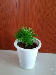 Indoor plant for sale!
