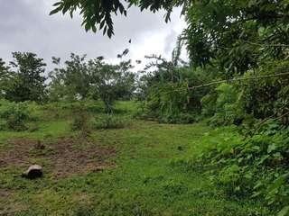 Farm Land Alfonso Cavite