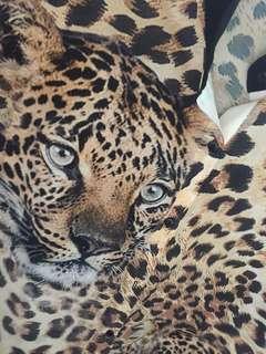 Dress leopard moschino