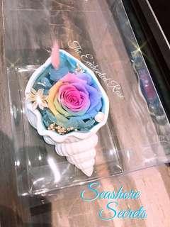 Rainbow Preserved rose in Seashell ~ Seashore Secrets