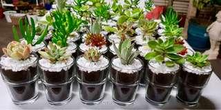 Succulents Giveaways