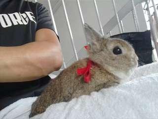 Professional rabbit grooming(flat $15 transportation charges islandwide!!!)