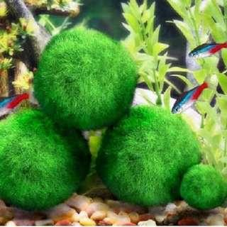 1pc #j726 Cladophora Live Aquarium Plant Fish Tank Shrimp Nano For MARIMO MOSS BALLS Fish Tank Ornament