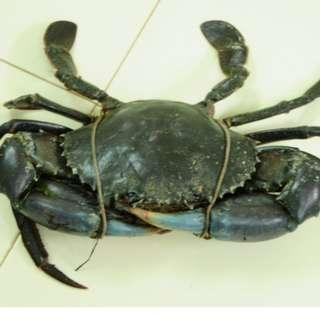 🚚 Live Srilankan Crab 2 Pcs *FREE DELIVERY PROMOTION*