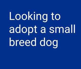🚚 Looking to Adopt a Small Dog