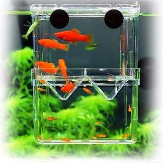 Breeding / Isolation / Separator / Divider Box for Guppy / Small Fish